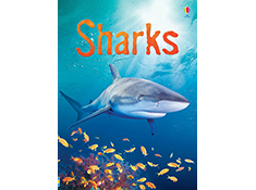 Sharks (Beginners Nature)