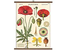 Vintage School Chart- Botany