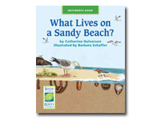 What Lives on a Sandy Beach? - Seeds of Science